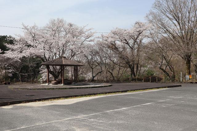 星ヶ見公園駐車場(3月30日撮影)