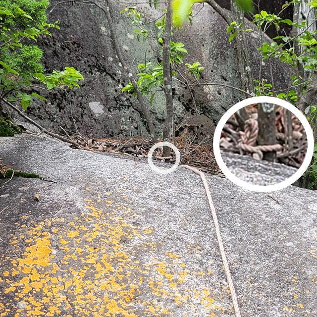 細いロープは細い木にくくられていた
