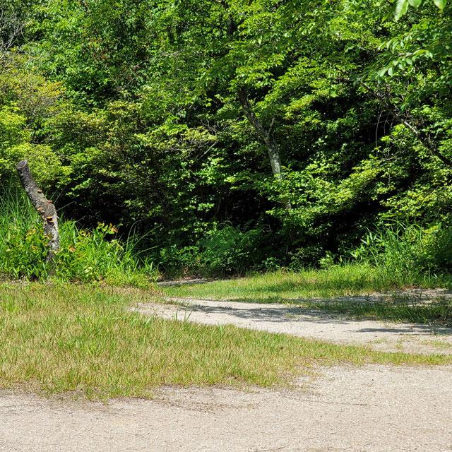 木が生い茂る道を進む