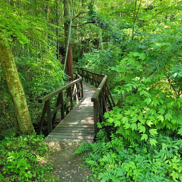 竹に進路を遮られる遊歩道