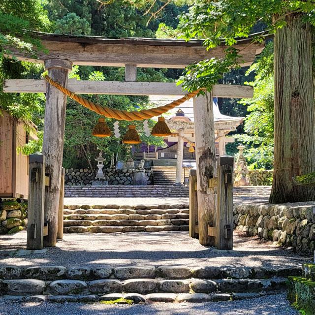 村指定の天然記念物の見事な杉の木